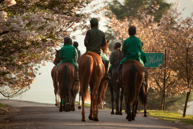 Horses walking through cherry blossoms at Hartford House