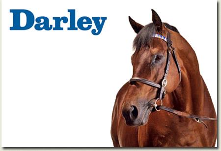 dubawi stallion at darley stud