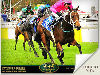 waywest goddess emperors palace ready to run cup contender