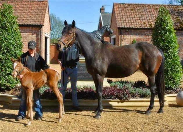 Ouija Board with her Galileo Colt Foal, Australia (2011) / The Vault (p)