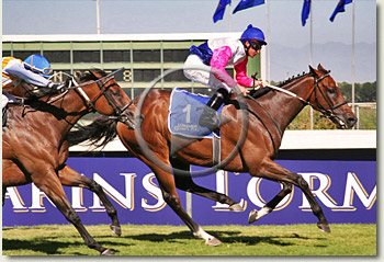 pocket power l'ormarins queens plate 2010 video
