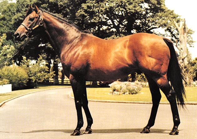 Sir Tristram Stallion
