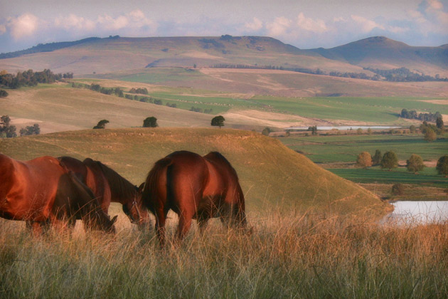 """There's a reason we chose to pitch our tent in this neighbourhood"" / Summerhill Stud (p)"