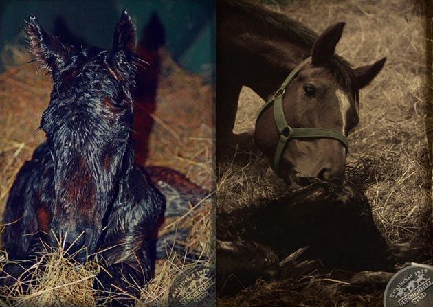 foals-4.jpg