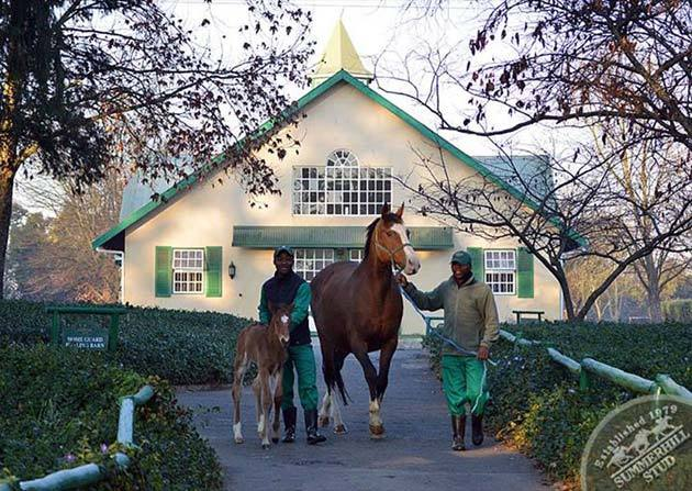 foals-1.jpg