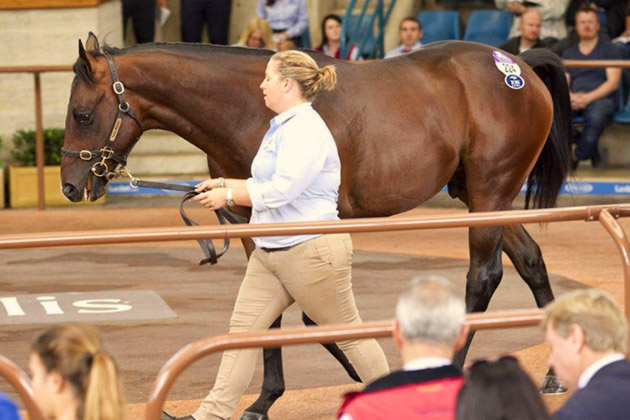 inglis easter yearling sale day 2 street cry