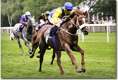 imbongi racehorse