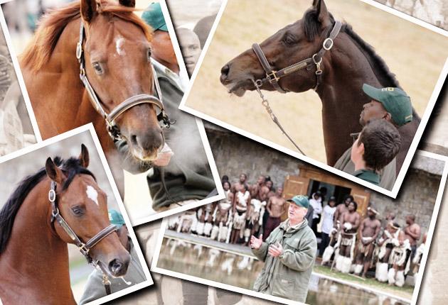 Cathsseta Summerhill Stallion Day /Liesl King (p)