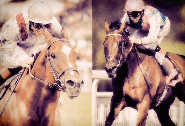 Toronado vs Kingman / Horseracing Nation-The Telegraph (p)