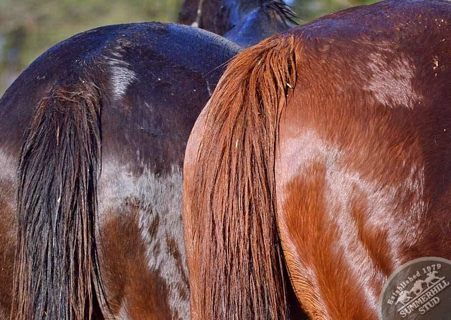 broodmares-foaling-season-prep-8.jpg
