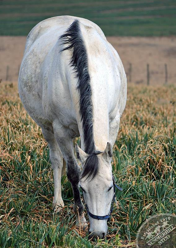 broodmares-foaling-season-prep-15.jpg