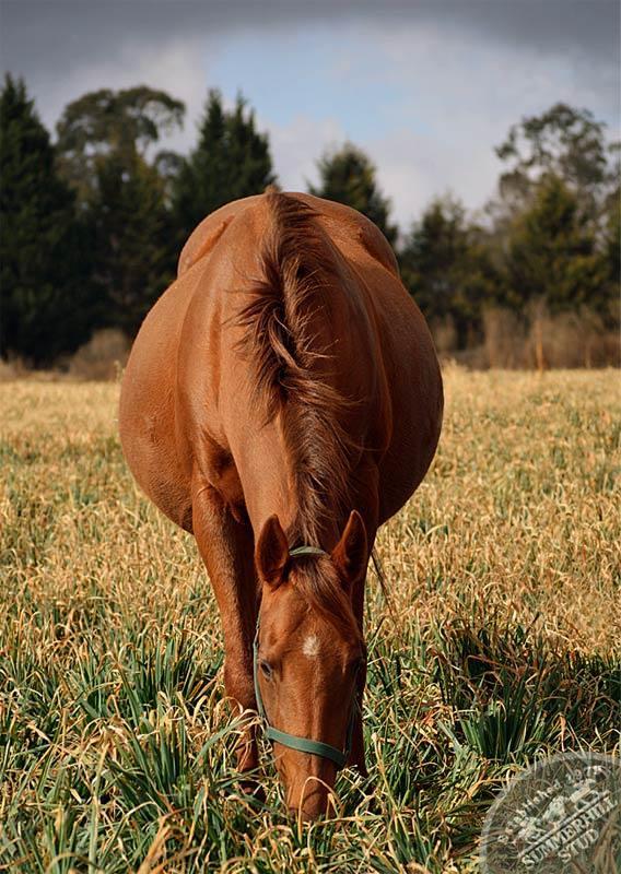 broodmares-foaling-season-prep-17.jpg