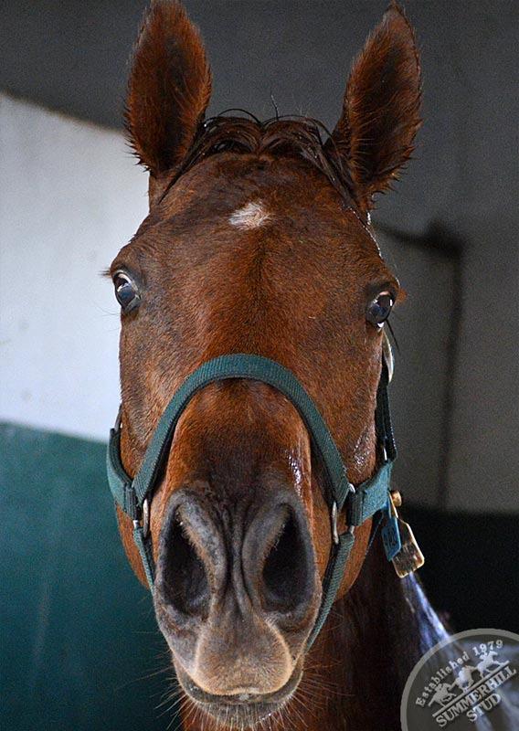 broodmares-foaling-season-prep-2.jpg