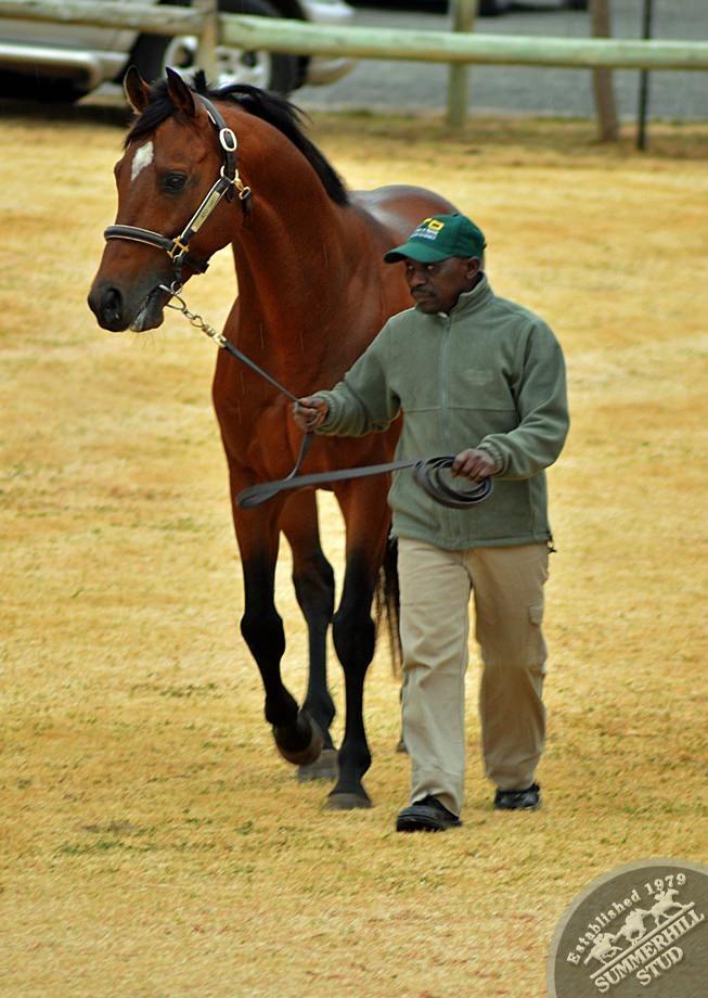cathsseta-stallion-day-54.jpg