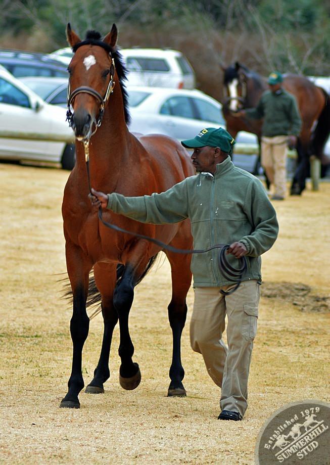 cathsseta-stallion-day-56.jpg