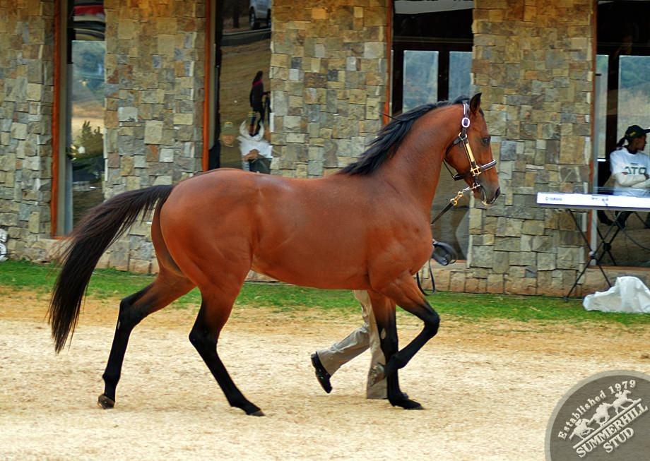 cathsseta-stallion-day-57.jpg