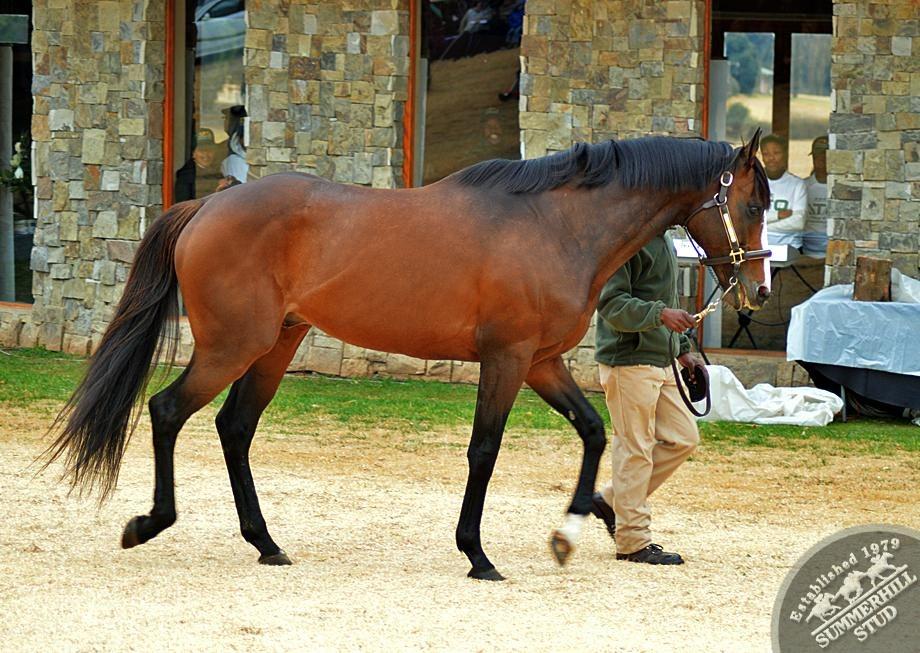 cathsseta-stallion-day-63.jpg