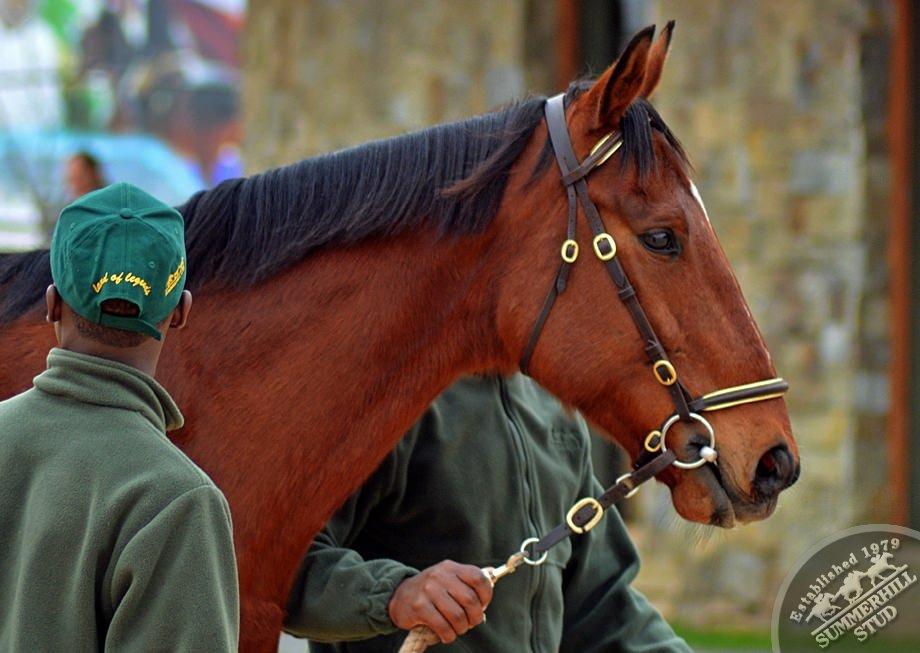 cathsseta-stallion-day-65.jpg