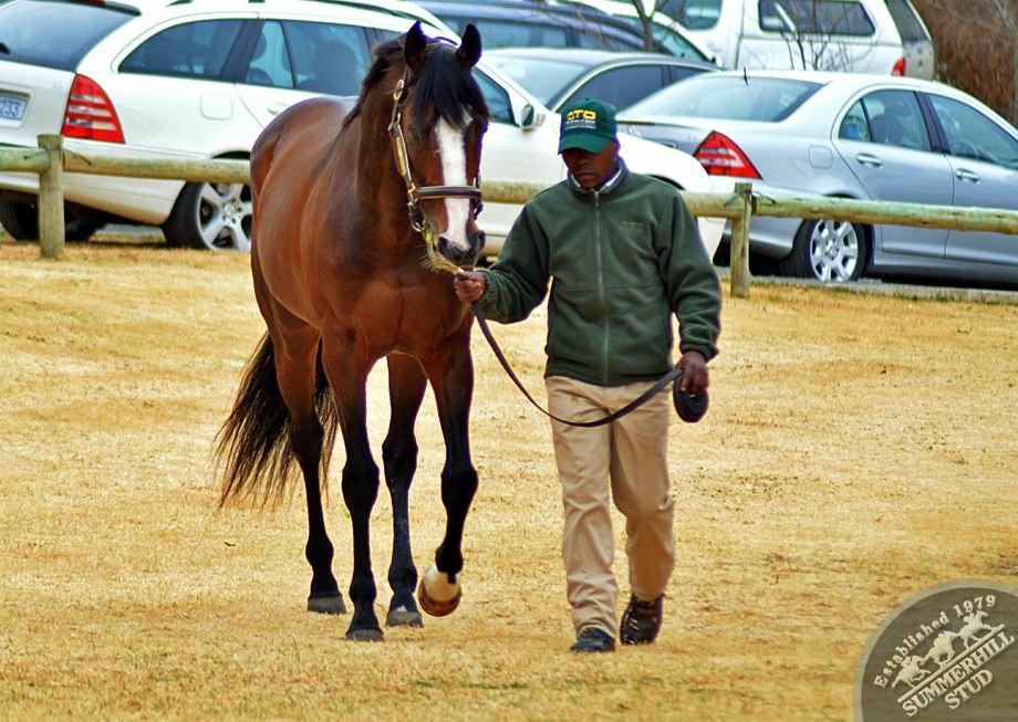 cathsseta-stallion-day-60.jpg