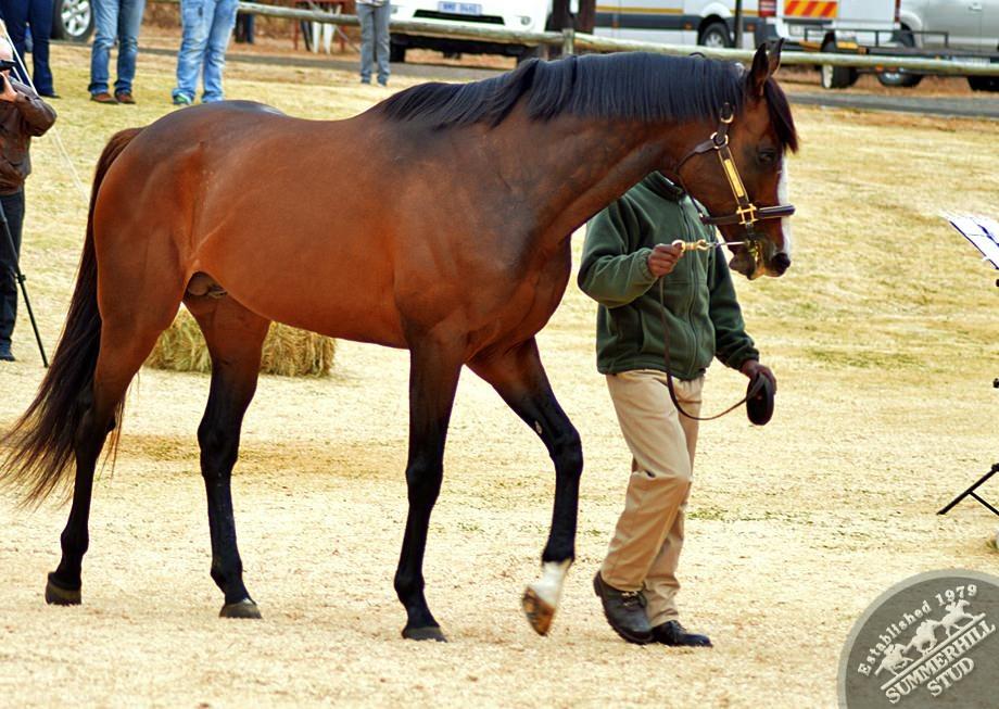 cathsseta-stallion-day-61.jpg