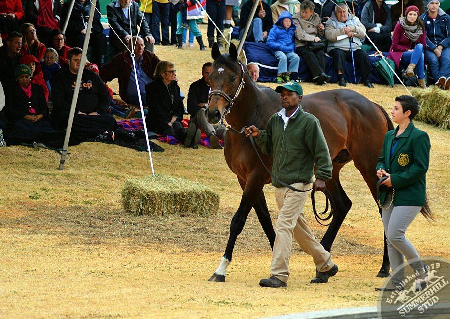 cathsseta-stallion-day-72.jpg