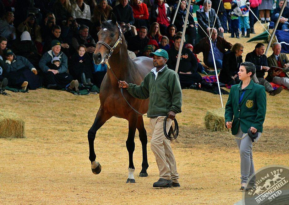 cathsseta-stallion-day-71.jpg