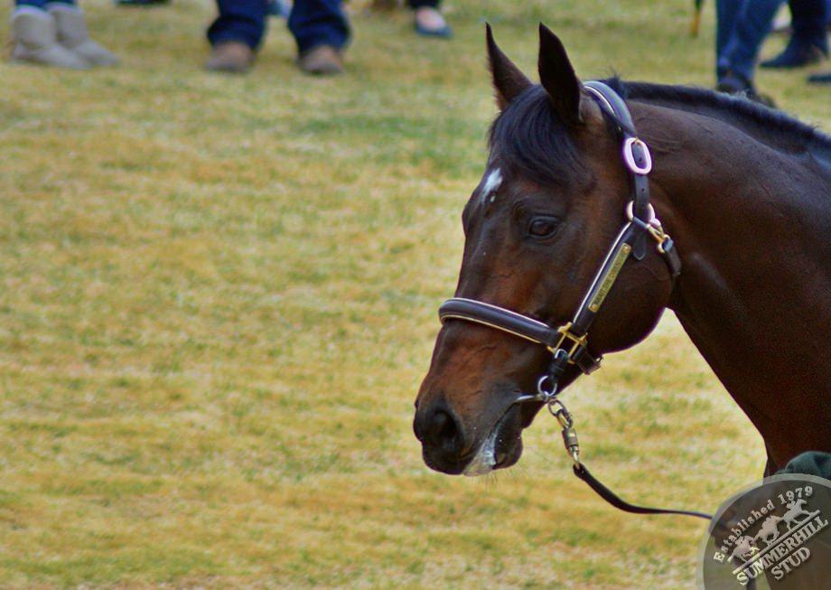 cathsseta-stallion-day-74.jpg