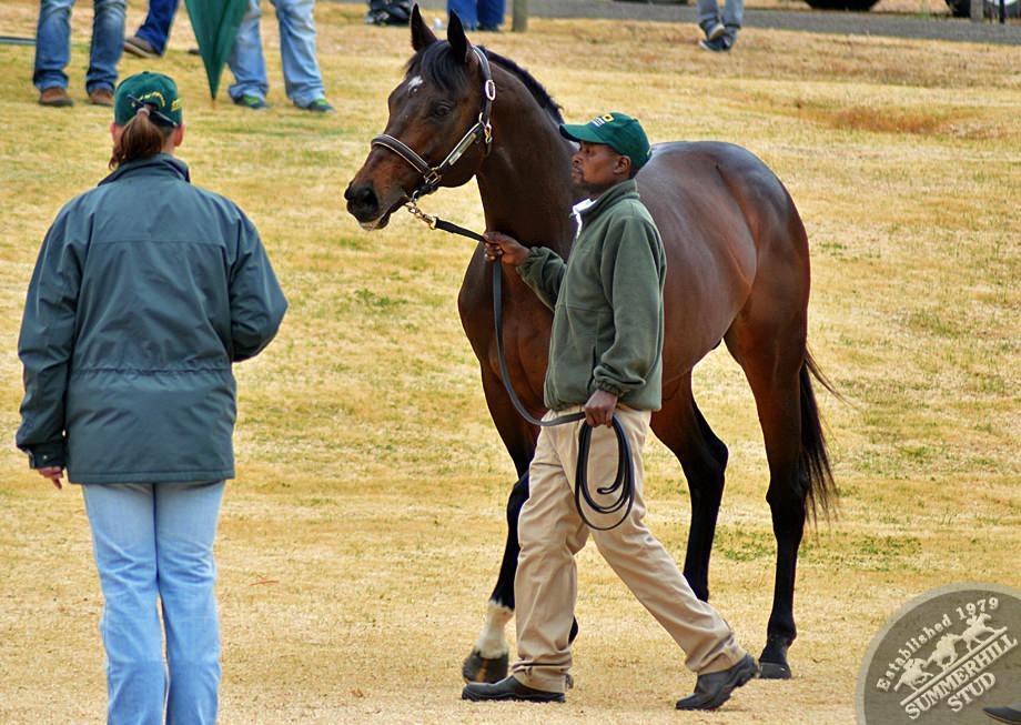 cathsseta-stallion-day-73.jpg