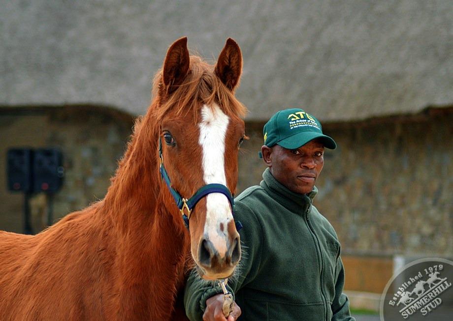 cathsseta-stallion-day-68.jpg