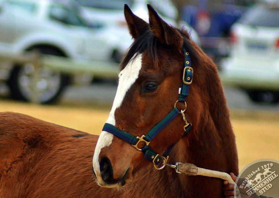 cathsseta-stallion-day-67.jpg