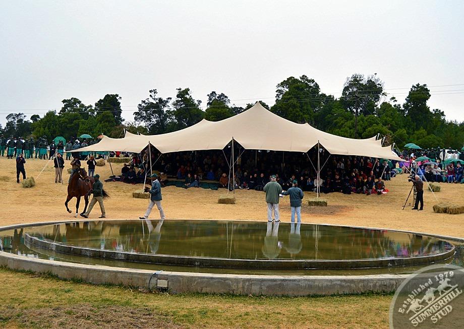 cathsseta-stallion-day-75.jpg