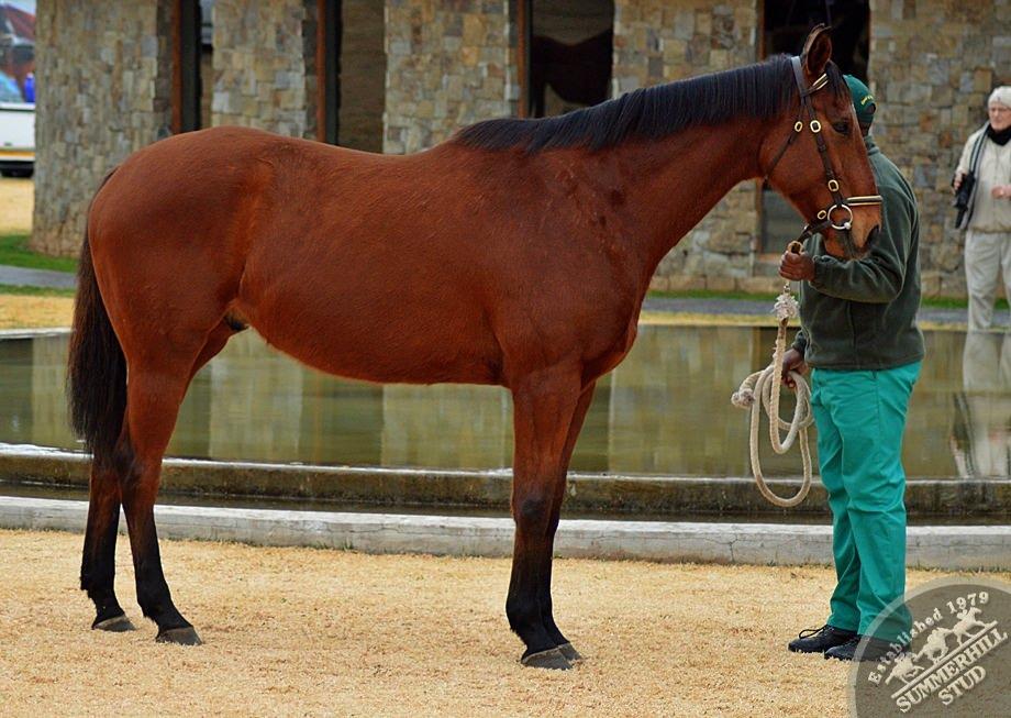 cathsseta-stallion-day-66.jpg