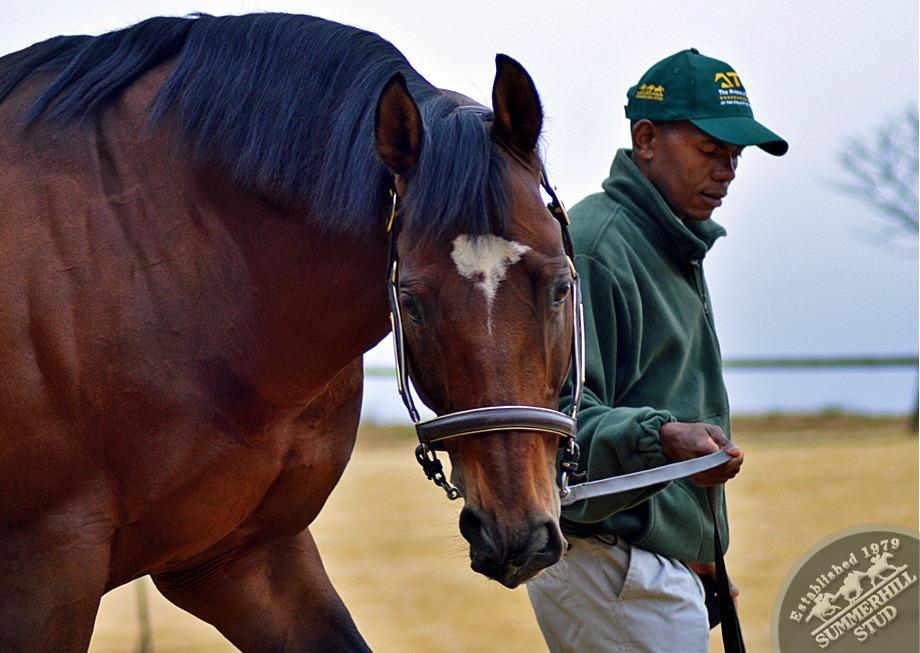 cathsseta-stallion-day-82.jpg