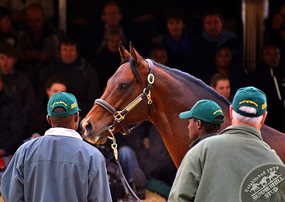 cathsseta-stallion-day-79.jpg