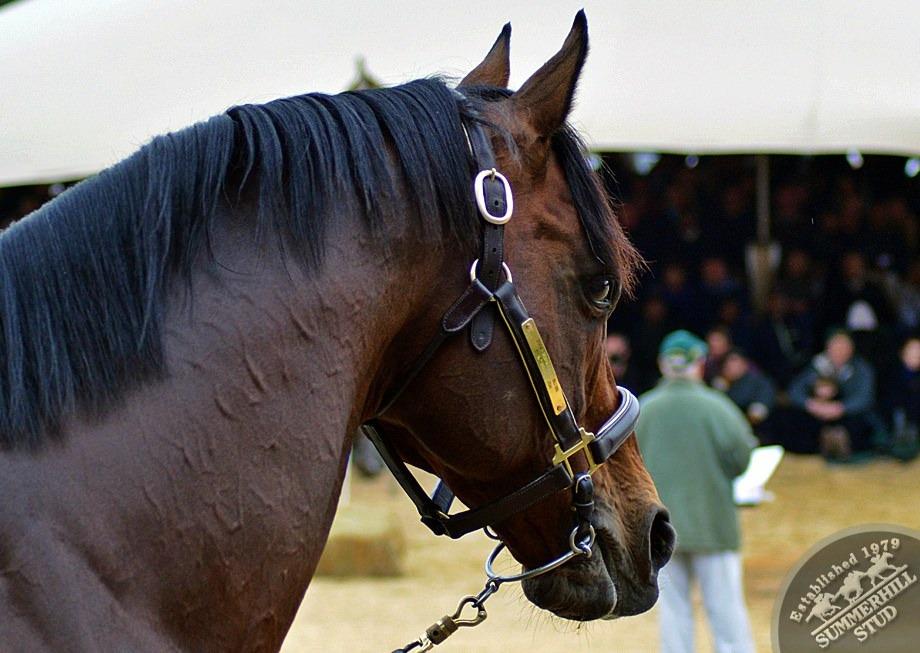 cathsseta-stallion-day-78.jpg