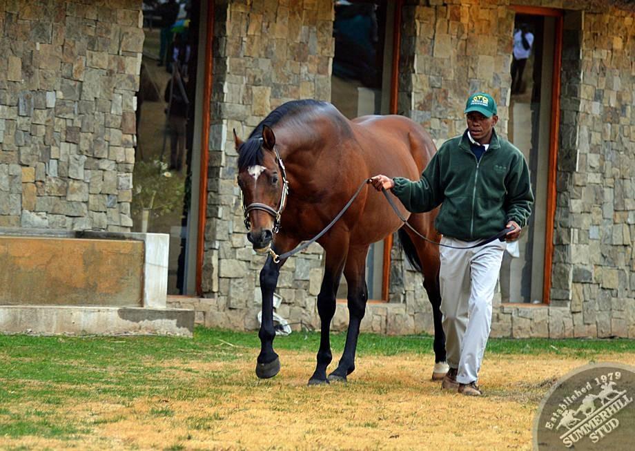 cathsseta-stallion-day-81.jpg