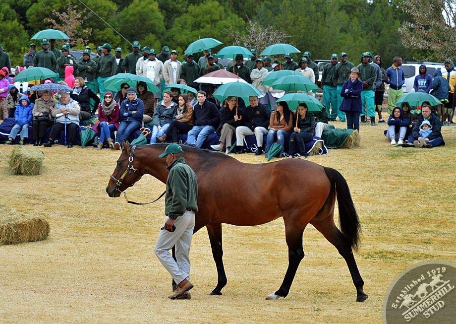 cathsseta-stallion-day-80.jpg