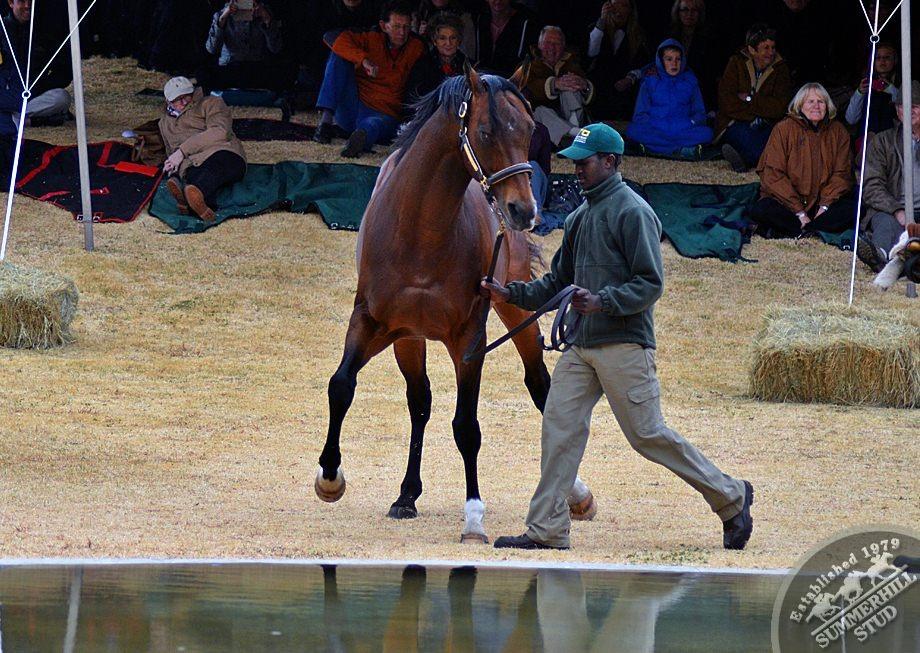 cathsseta-stallion-day-77.jpg