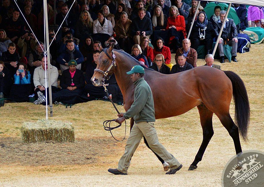cathsseta-stallion-day-76.jpg