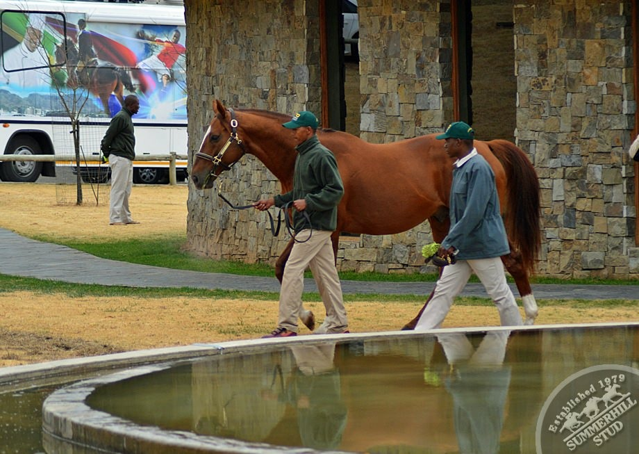 cathsseta-stallion-day-94.jpg