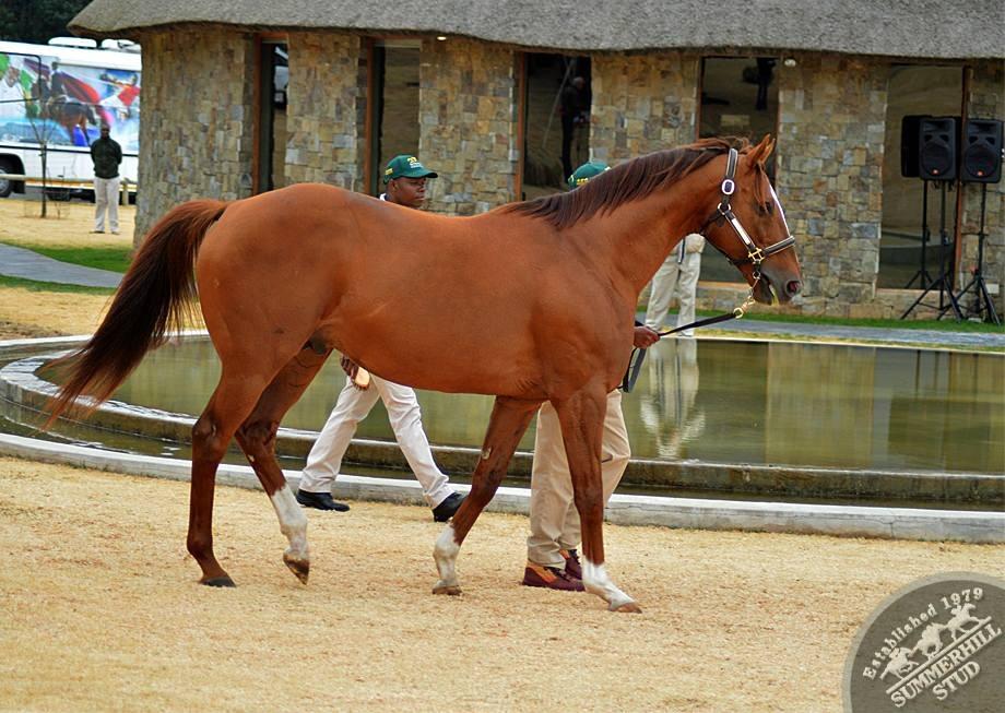 cathsseta-stallion-day-93.jpg