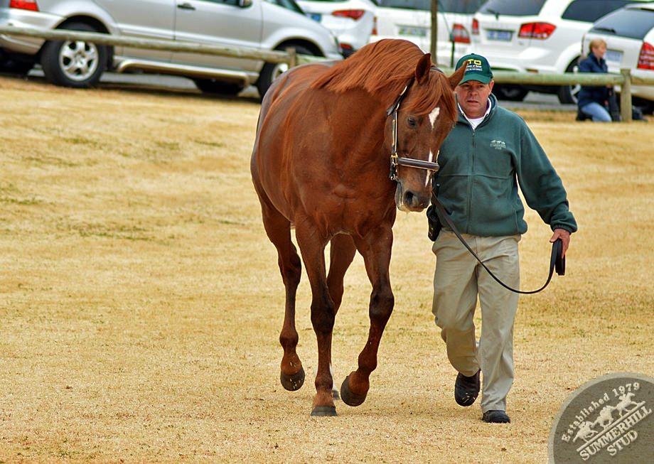 cathsseta-stallion-day-95.jpg