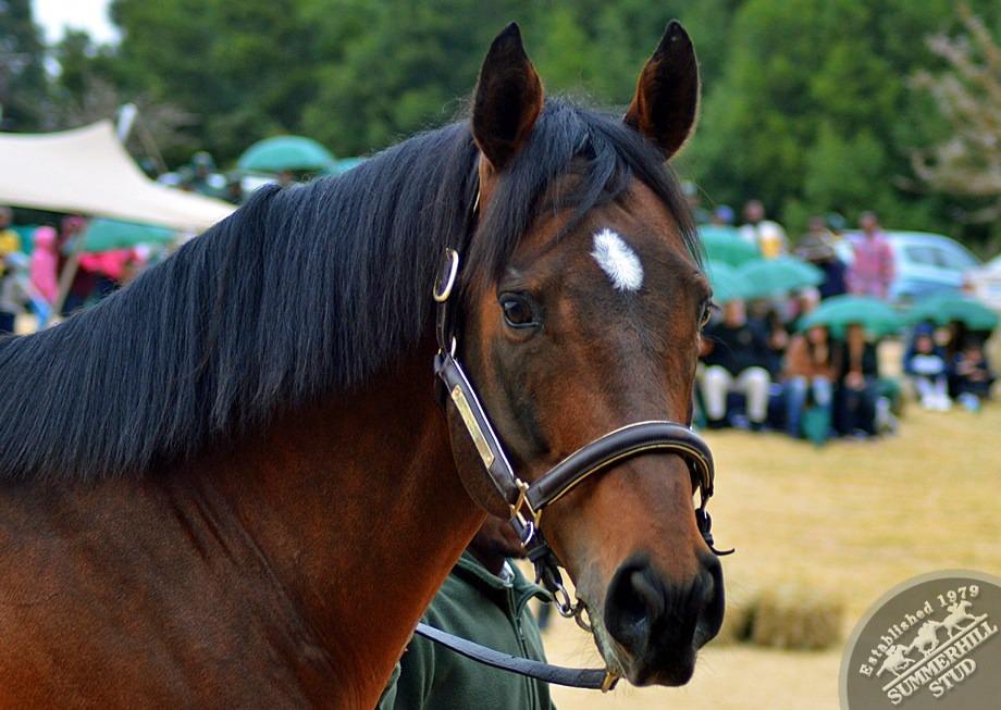 cathsseta-stallion-day-90.jpg