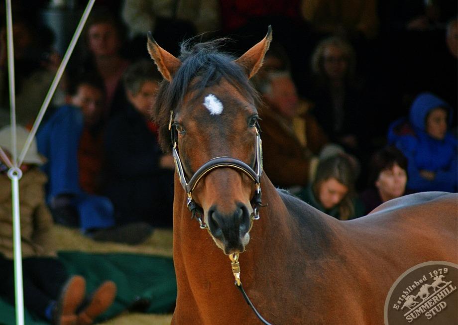 cathsseta-stallion-day-89.jpg