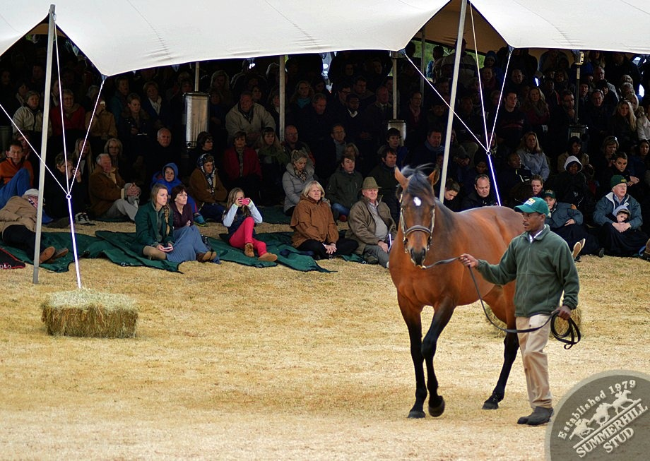 cathsseta-stallion-day-91.jpg