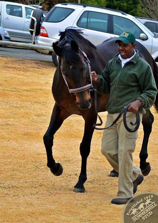 cathsseta-stallion-day-86.jpg