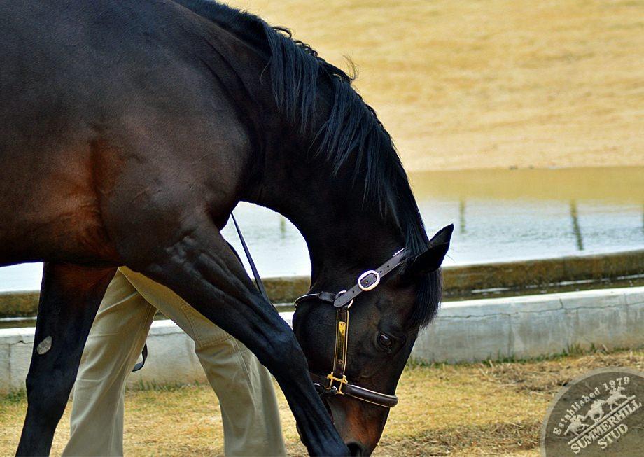 cathsseta-stallion-day-88.jpg