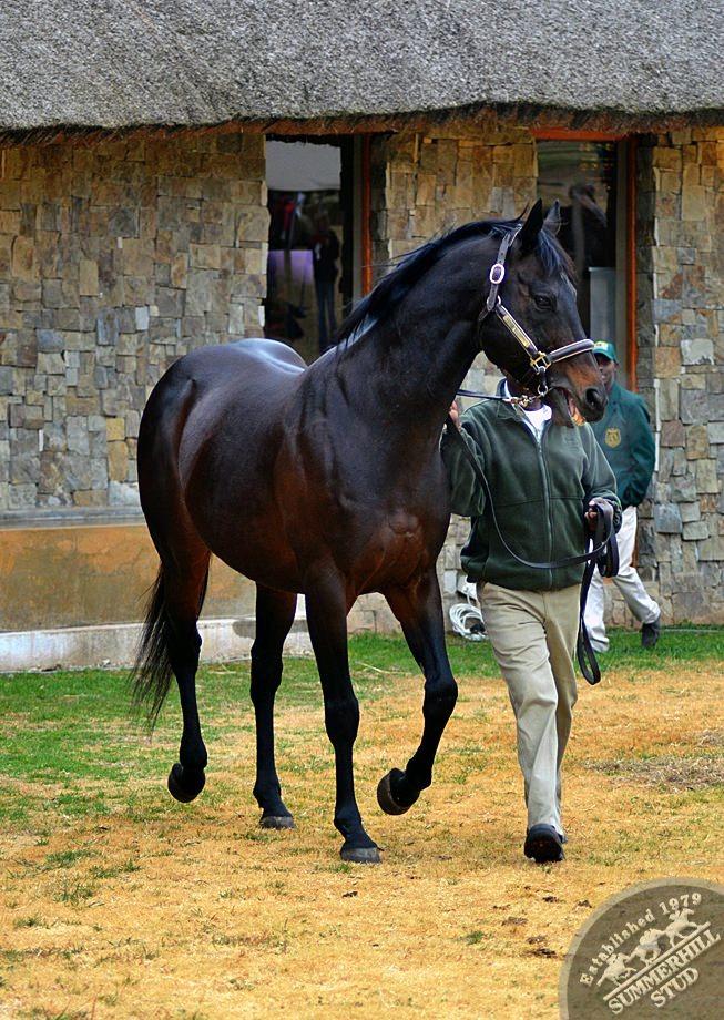 cathsseta-stallion-day-87.jpg