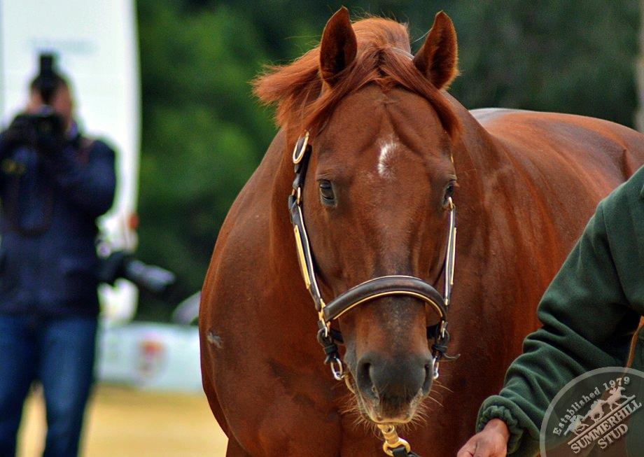 cathsseta-stallion-day-102.jpg