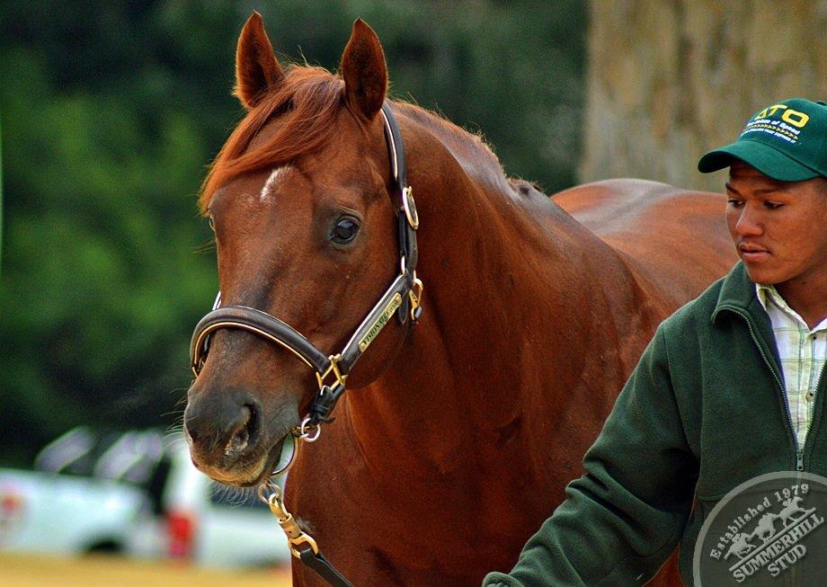 cathsseta-stallion-day-101.jpg